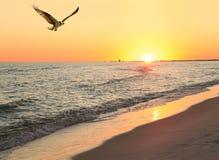 当太阳设置在海滩,白鹭的羽毛飞行在海滩 免版税库存图片