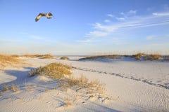 当太阳设置熔铸的长的阴影,白鹭的羽毛飞行在海滩 库存照片