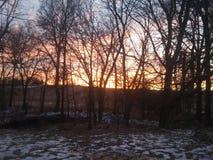 当太阳通过树落 免版税库存图片
