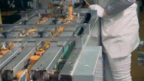 当工厂劳工控制过程时,完成的饼干沿传送带移动 影视素材