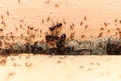 当心人群大蚂蚁,他们在家居住 库存照片