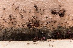 当心人群大蚂蚁,他们在家居住 免版税库存照片