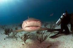 当心鲨鱼微笑 免版税图库摄影
