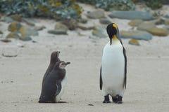 当我长大我时要是企鹅国王 库存照片