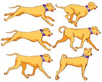 当狗奔跑、步行和岗位 皇族释放例证