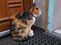 当猫说时donÂ't拍摄了我 然后这不是可能的 免版税图库摄影
