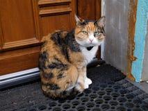 当猫说时donÂ't拍摄了我 然后这不是可能的 库存照片
