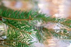 当背景是圣诞节可以使用的反映结构树 图库摄影