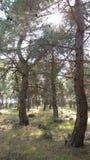 当走在森林里时 免版税库存照片