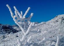 当雪坚持棍子 免版税库存照片