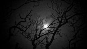 当黑暗爬行您时,让我是光 库存照片