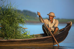 当他运输捆绑绿色竹子,一条木小船的一个地方缅甸人微笑 库存图片