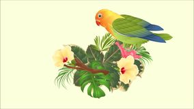 录影站立在分支和木槿,棕榈,爱树木的人的动画无缝的圈鹦鹉爱情鸟Agapornis热带鸟, fic 股票视频