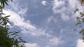 录影镜头、绿色竹叶子、绿色热带叶子纹理天空蔚蓝和云彩背景 股票录像