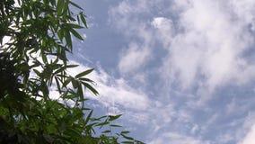 录影镜头、绿色竹叶子、绿色热带叶子纹理天空蔚蓝和云彩背景 影视素材