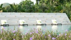 录影 在一个游泳池附近的活动靠背扶手椅与自然绿化树背景和美丽的花在前景,波浪水 股票录像