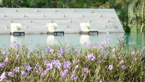 录影 在一个游泳池附近的活动靠背扶手椅与自然绿化树背景和美丽的花在前景 股票录像