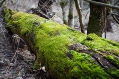 登录森林 库存照片