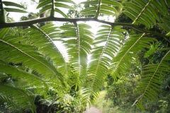 形成一个自然样式的豪华的绿色叶子 免版税库存照片