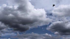 形成云彩天空timelapse的风暴 移动在60 fps的云彩快速的充分的HD 股票视频