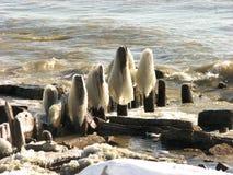 形成冰密执安湖密尔沃基码头 免版税库存图片