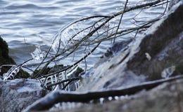 形成在河岸的冰 免版税库存图片
