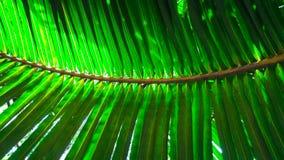 形成平行的线和对称的椰子叶子 免版税库存图片