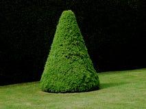 形成抽象形状的修剪的花园的例子 免版税库存图片