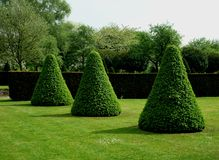 形成抽象形状的修剪的花园的例子 库存照片