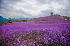 形成淡紫色领域公园 免版税图库摄影