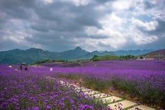 形成淡紫色领域公园 免版税库存图片
