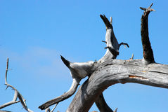 形成结构树 库存图片