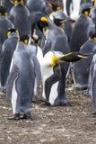 形状的企鹅国王-! 免版税库存照片
