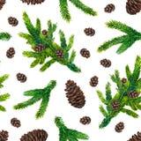 水彩与冷杉分支和pinecones的圣诞节样式 库存照片