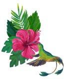 水彩与异乎寻常的花和叶子的哼唱着鸟 免版税库存照片