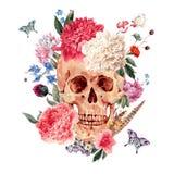 水彩与头骨和桃红色牡丹的传染媒介卡片 库存图片