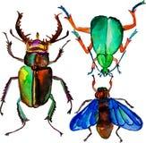 水彩五颜六色的昆虫 免版税库存照片