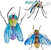 水彩五颜六色的昆虫 免版税图库摄影