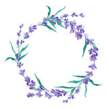 水彩传染媒介淡紫色花圈 库存照片