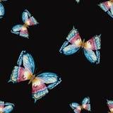 水彩传染媒介蝴蝶图案 库存图片