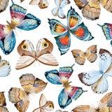水彩传染媒介蝴蝶图案 图库摄影