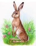水彩例证野兔 库存照片