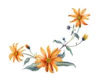 水彩分支桔子花 库存图片