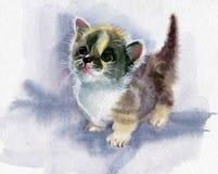 水彩动物收藏:小猫 免版税图库摄影