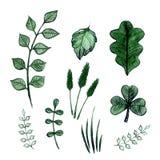 水彩叶子和植物 库存图片