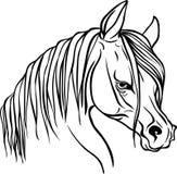 彩图的马头 图库摄影