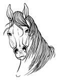 彩图的马头 库存照片