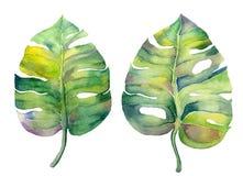 水彩在白色隔绝的湿气叶子 向量例证