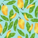 水彩夏天无缝的样式用芒果在绿松石背景结果实并且离开 印刷品的,纺织品, wrappin热带设计 免版税库存图片