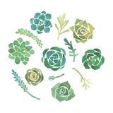 水彩多汁植物集合 免版税库存图片